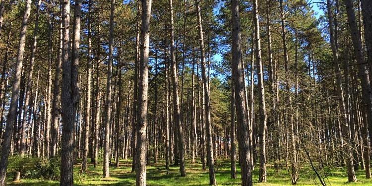 Giornata ecologica ad Avezzano. Appuntamento in Pineta il 27 settembre