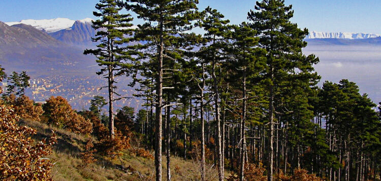 Rimozione alberi e rami secchi pericolanti nella Riserva Naturale Monte Salviano
