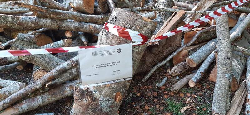 Scoperto taglio di legna abusivo nel Parco Nazionale. Identificato e denunciato il responsabile