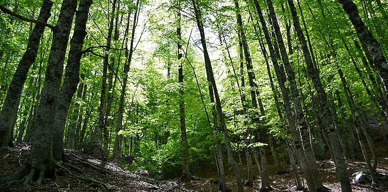 Stop all'accesso e alle escursioni nella faggeta della Val Cervara per preservare l'habitat