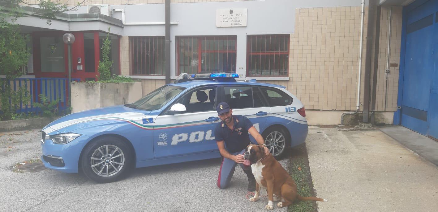 Abbandonano il cane in autostrada: la Polizia Stradale li rintraccia immediatamente e scatta la denuncia
