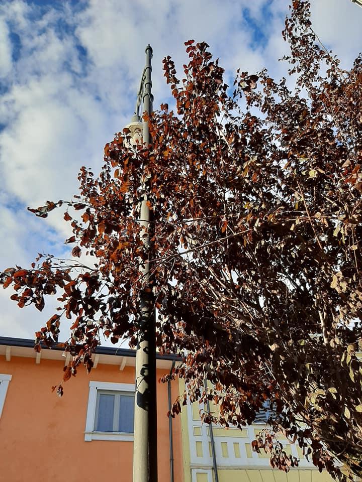 San Benedetto dei Marsi, scattano le operazioni per la sostituzione degli alberi su Corso Vittorio Veneto e Via Pace