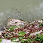 Sopralluogo delle Guardie Ecozoofile a Fucino. Brandelli di ogni genere di rifiuti lungo un canale
