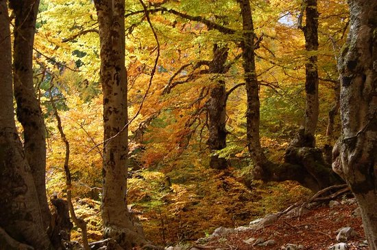 I colori e i profumi d'autunno nel Parco Nazionale d'Abruzzo Lazio e Molise