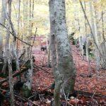 Mattinata di paura per 2 escursionisti a Lecce dei Marsi che incontrano improvvisamente un orso