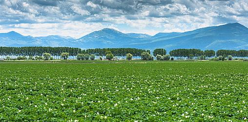 Agricoltori e PMI colpiti dalla crisi di Covid-19. La Regione Abruzzo approva bando per misure di sostegno