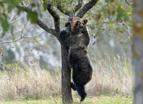 L'orso marsicano e il PNALM finiscono su Vanity Fair