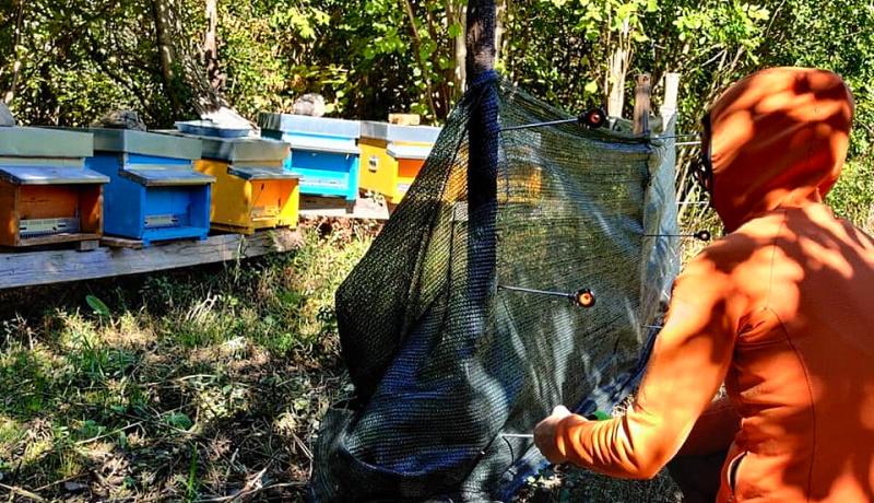 Tutela dell'orso marsicano, volontari del WWF montano due recinti a San Vincenzo Valle Roveto