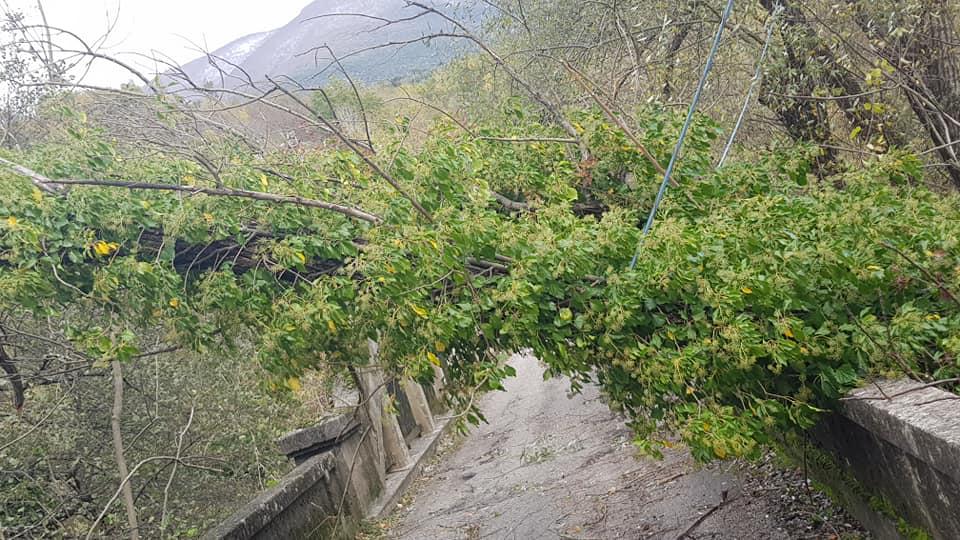 Forti raffiche di vento, cade un albero sul ponte di ingresso a San Vincenzo Valle Roveto