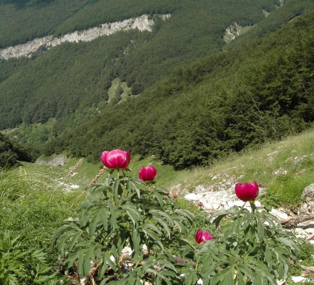 La Flora del Parco Nazionale della Majella, strumento di tutela della biodiversità