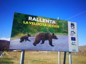 Parco Nazionale della Majella e Anas insieme per impedire incidenti con la fauna selvatica