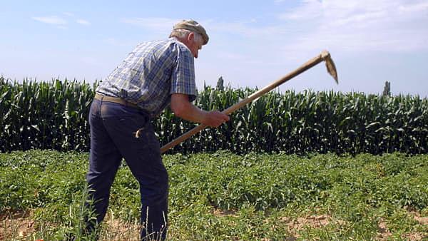 Zona arancione, chiarimenti sugli spostamenti per agricoltori, allevatori, cercatori di funghi e cacciatori
