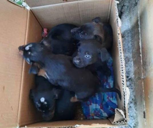 Sei cuccioli abbandonati vicino al pozzo del Cimitero Comunale di Cerchio