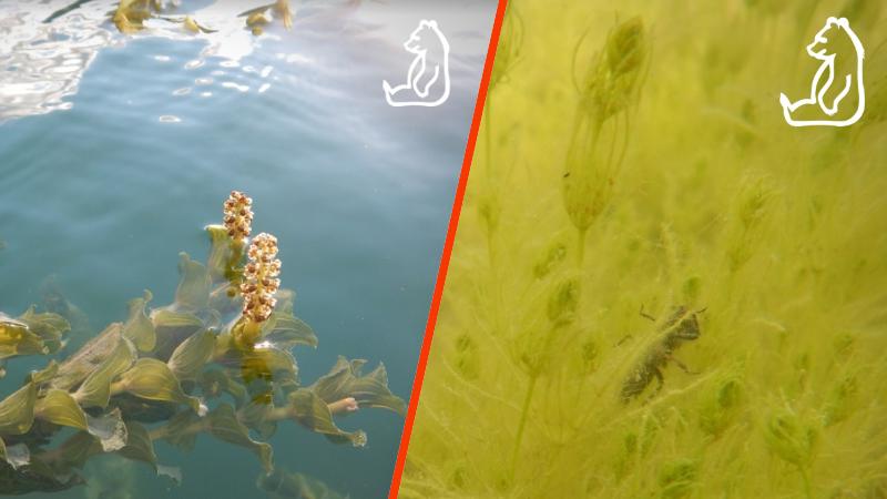 La collaborazione fra il Parco e l'ENEL sta favorendo la biodiversità del Lago di Barrea