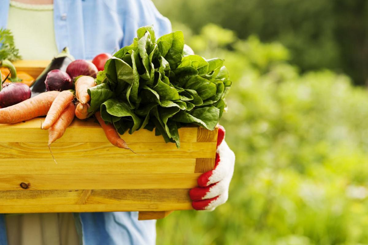 Forte cedimento dell'export abruzzese, ma la Marsica ha una importante opportunità da giocare: il settore agroalimentare