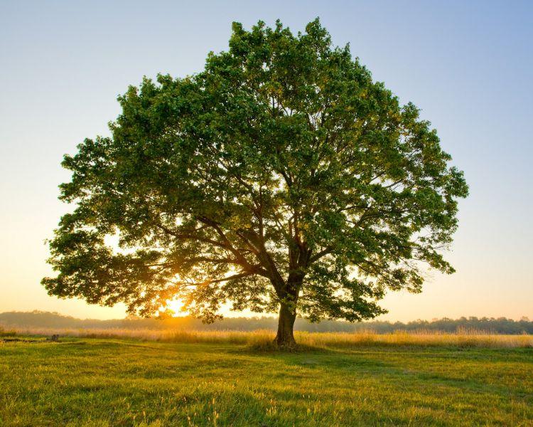 Sante Marie, il 30 dicembre si potrà realizzare l'albero della famiglia