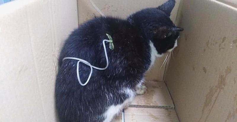 Non ce l'ha fatta il gattino avvelenato ieri in una piazzetta di Cese