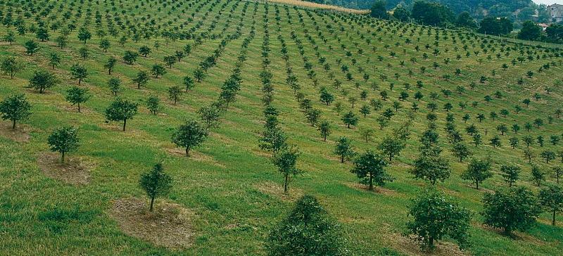 Contributi per imboschimenti su terreni agricoli mediante impianti tartufigeni