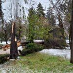 Cade un grosso pino nel centro del Parco della Rimembranza