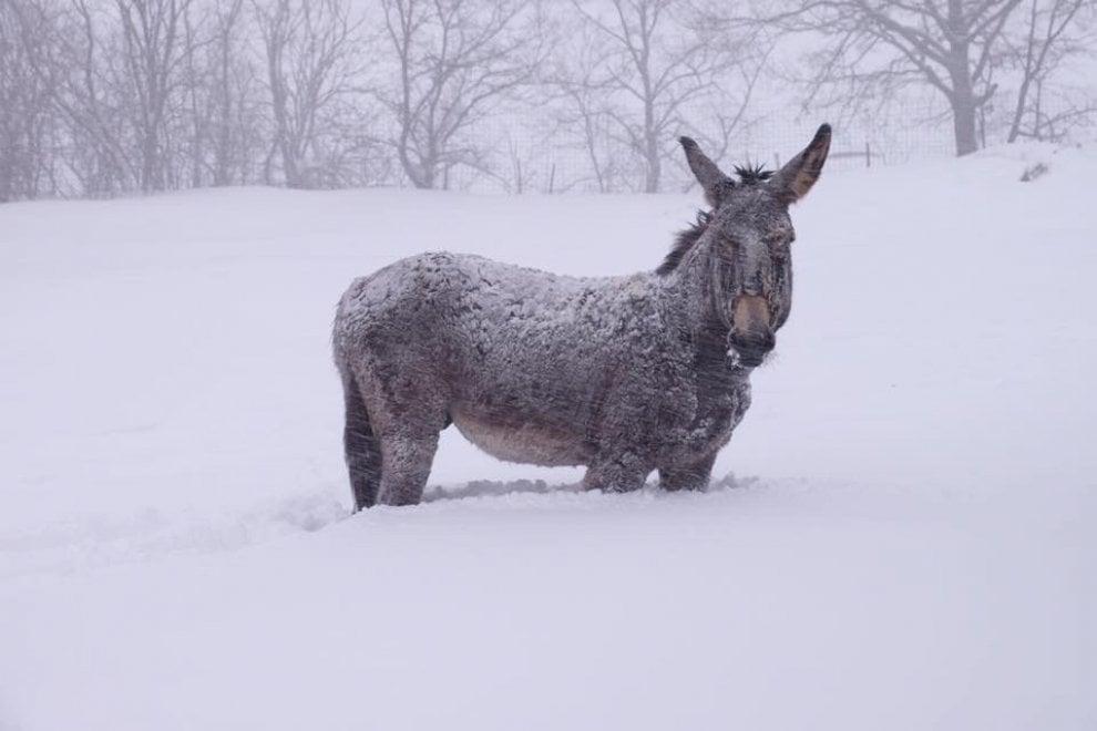 Allevamento isolato a causa della neve: 50 animali rischiano di rimanere senza cibo