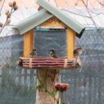 Ecco come aiutare gli uccelli selvatici d'inverno, dal WWF i consigli per mangiatoie e cibo per l'avifauna