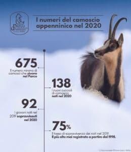 """Buone notizie sulla popolazione di camoscio appenninico del Parco Nazionale d'Abruzzo Lazio e Molise: """"Una specie unica, un simbolo dell'Appennino da tutelare"""""""