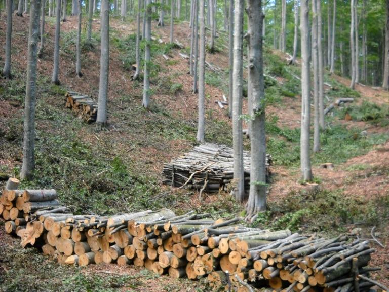 Trasacco, pubblicato il bando di gara di alienazione particella boschiva comunale ad uso commercio Loc. Valle Castagna