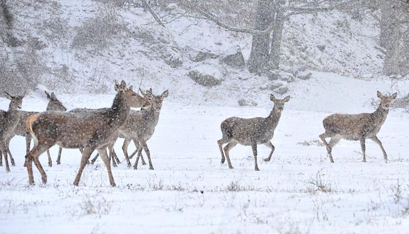 Dal PNALM consigli per vivere la natura d'inverno rispettando gli animali selvatici