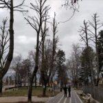 San Benedetto dei Marsi, al via i lavori di messa in sicurezza degli alberi della villa comunale
