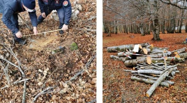 Carabinieri forestali sequestrano bosco di faggio di proprietà comunale