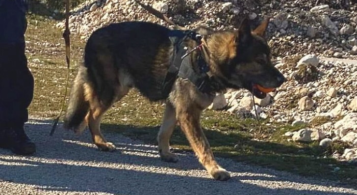 Il cane del soccorso alpino che ha permesso il ritrovamento degli escursionisti sul Velino