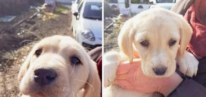 Otto cuccioli trovarti morti, probabilmente sono stati avvelenati