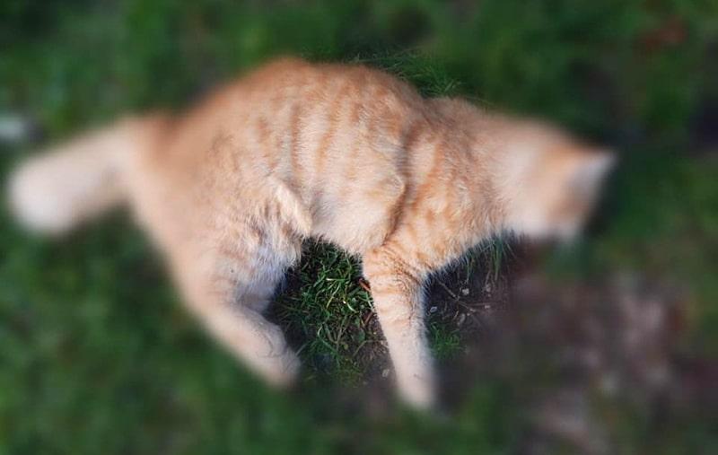 Bocconi avvelenati a Trasacco, ne ha fatto le spese un bel gatto rosso