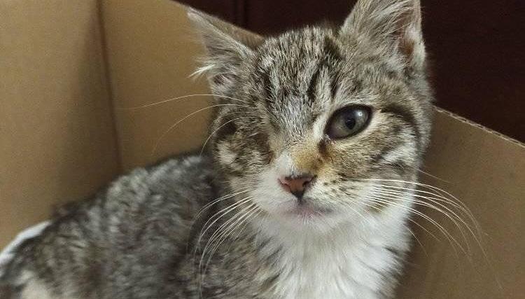 Gattino gettato via perché è nato senza un occhio