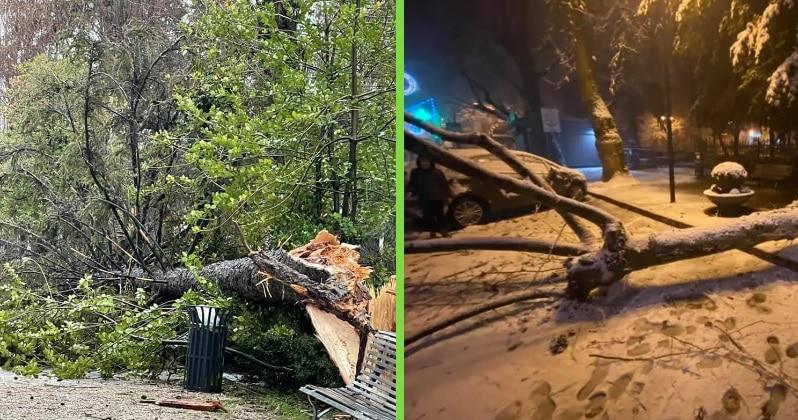 L'amministrazione comunale di Tagliacozzo mette in sicurezza il parco della Rimembranza dal pericolo di caduta degli alberi