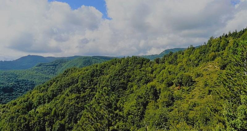 Patrimonio forestale abruzzese, WWF: con il pretesto della semplificazione, si allentano i controlli