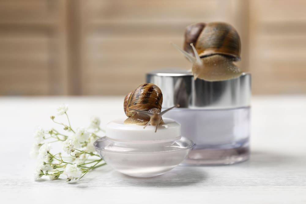 La crema bava di lumaca: da Ippocrate fino ai giorni nostri