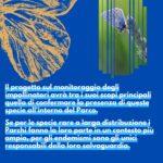Le farfalle endemiche nel Parco Nazionale d'Abruzzo