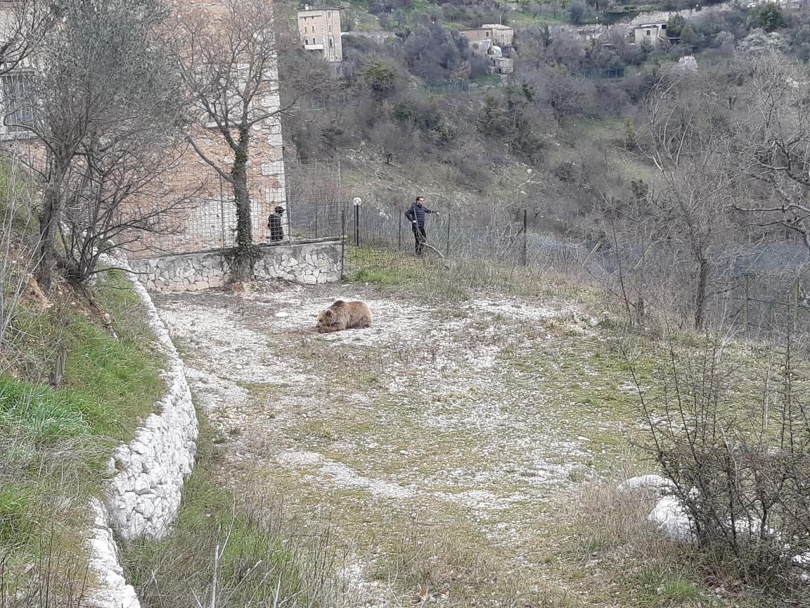 L'Orsa Sonia esce dall'area faunistica di Campoli Appennino, ora è al sicuro