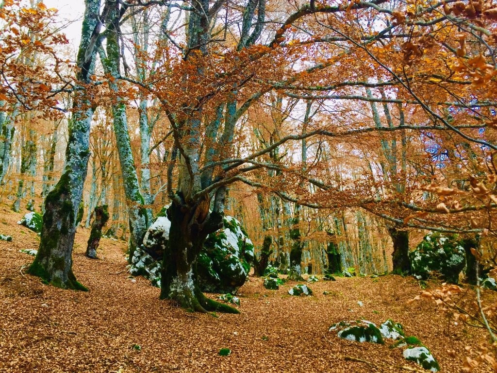 """Domani è la Giornata internazionale delle Foreste, il WWF: """"nelle foreste """"antiche"""" il futuro della biodiversità"""""""
