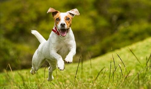 Microchip e iscrizione all'anagrafe canina per i cani di Collelongo
