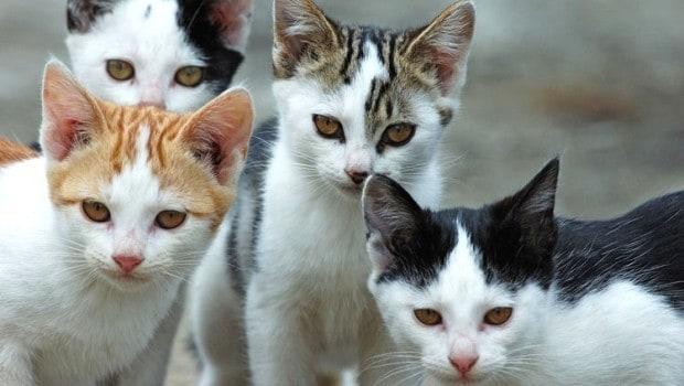 Denuncia del WWF: almeno 6 gatti uccisi con un coltello in una colonia felina di Pescara