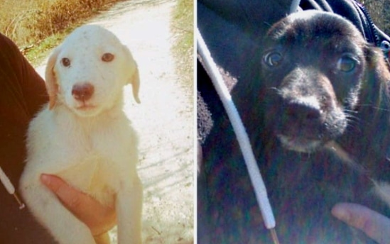 Recuperati due cuccioli buttati in un campo tra Cese e Capistrello