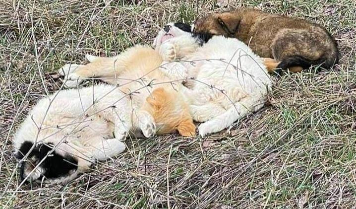 Cuccioli buttati in un campo a Celano, recuperati e messi in salvo da una ragazza