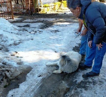Catturati 10 cani vaganti a Pescasseroli e mandati al canile