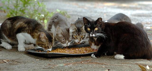 Ennesimo caso di avvelenamento di gatti in via Cavour a Trasacco