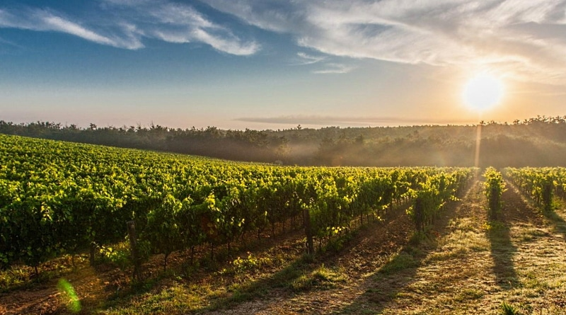 Cambiamenti climatici e filiera del vino. Progetto di sostegno per i viticoltori abruzzesi