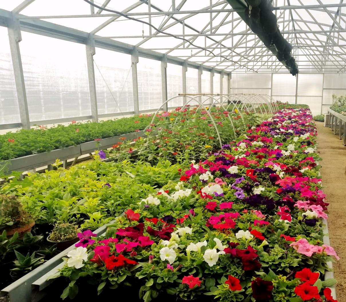 Al Serpieri è arrivata la primavera! Torna la vendita delle piante da fiore prodotte nell'istituto