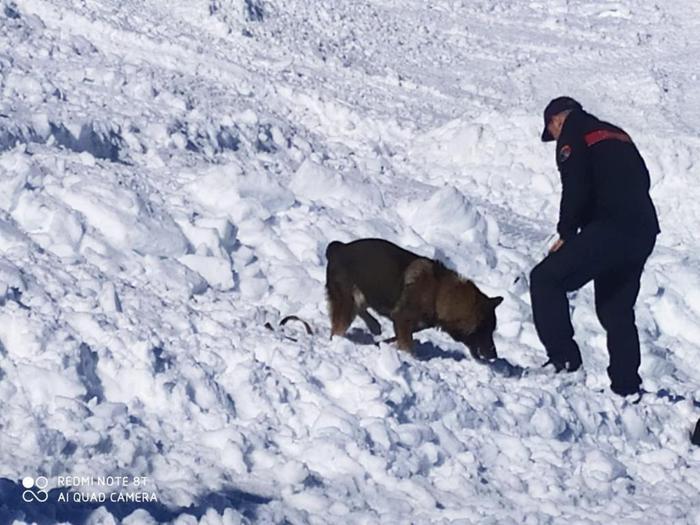 Si appresta alla pensione Simba, il cane protagonista del ritrovamento sul monte Velino: compirà 10 anni il 14 aprile