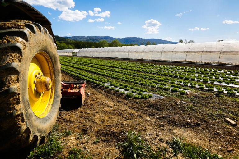 Sostegno a favore degli agricoltori e delle PMI, il Comune di Collarmele: ecco il bando della Regione Abruzzo